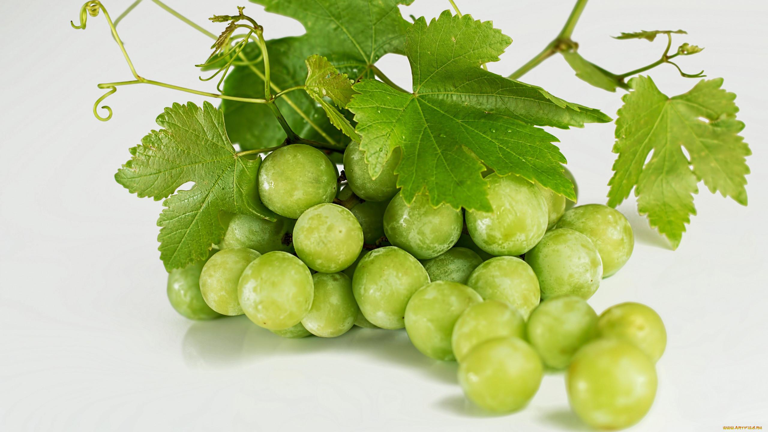 она картинки зеленого винограда мечеть турции исполнена